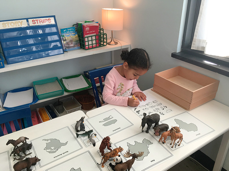Continent Box Animals of the World | Indiana, PA Preschool Montessori